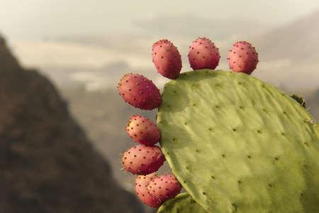 gran canaria: cactus in gran canaria