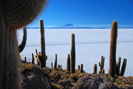 cactus on an islands salar de uyuni in bolivia photo
