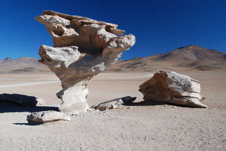 arbol: Arbol del Piedra en el desierto de Bolivia