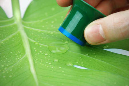 lotus effect: inspecting rain drops on a tropical leaf with lotus effect
