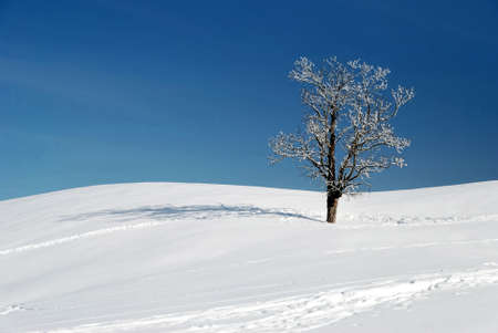 snow and tree in beautiful winter season Stock Photo