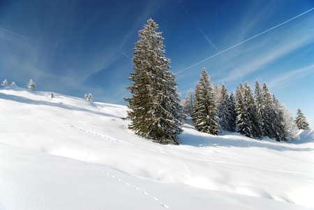 gorgeous winter season with fir trees Stock Photo - 12540982