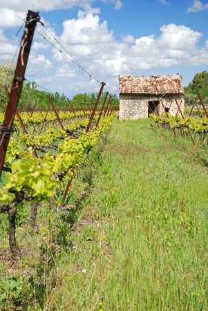 winegrowing: nice view of winegrowing in France Alsace