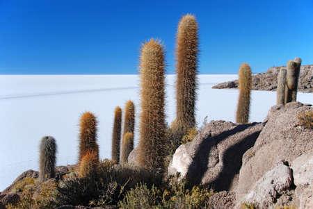 oxygene: Incahuasi island with cactus salar de uyuni salt flat