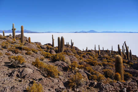 incahuasi: Incahuasi island in the salar de uyuni with cactus Stock Photo