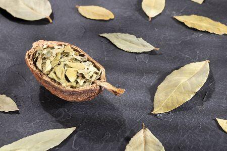 Dried Laurel and Ground Laurel - Laurus nobilis