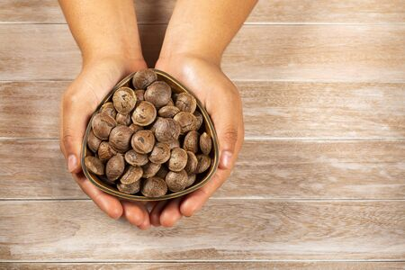 Hands holding sacha inchi peanut - Plukenetia volubilis