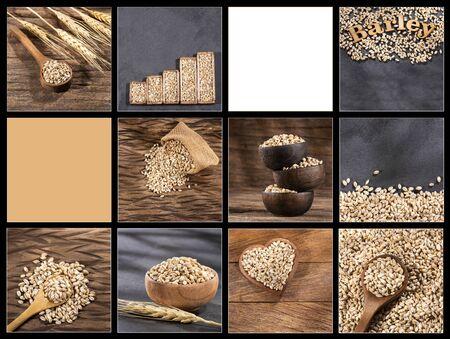 Creative collage of pearl barley images - Hordeum vulgare Zdjęcie Seryjne