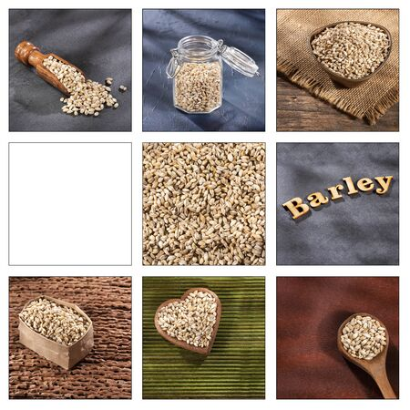 Hordeum vulgare - Creative collage of pearl barley images