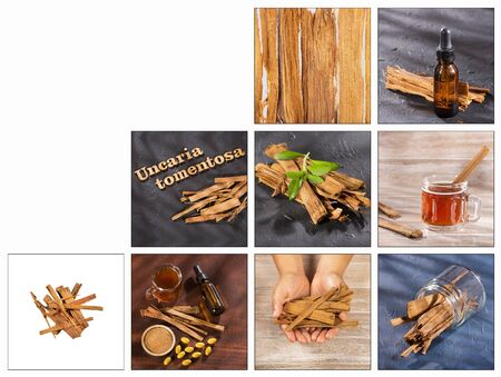 Creative collage of Uncaria tomentosa images - Peruvian plant cat's claw