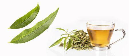 Aloysia citrodora - Tea with lemon verbena. White background Zdjęcie Seryjne