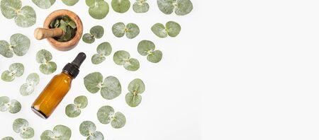 Green leaves and eucalyptus essence - Eucalyptus little boy blue