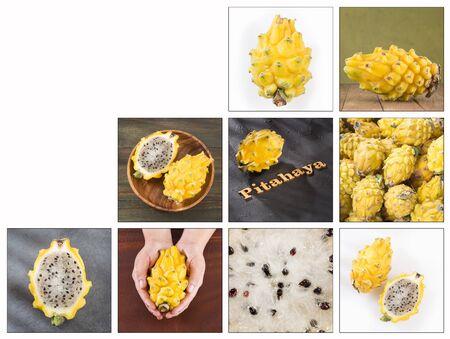 Creative collage of pitahaya images - Selenicereus megalanthus