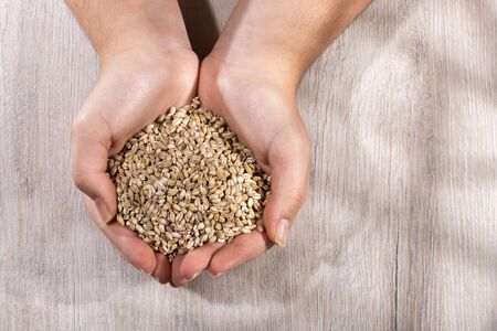 Hands holding pearl barley - Hordeum vulgare. Wood background Stok Fotoğraf