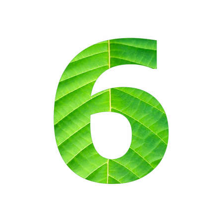 Number digit six - Tropical green leaf texture Banque d'images