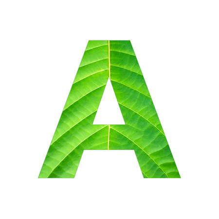 Alphabet Letter A - Green leaf plant background