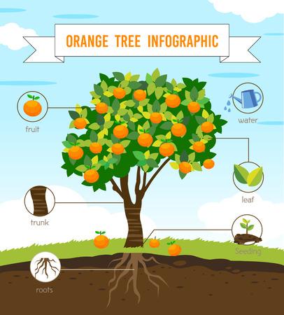 orange tree infographic vector Banco de Imagens - 53126378
