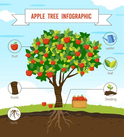 사과 나무 인포 그래픽 벡터