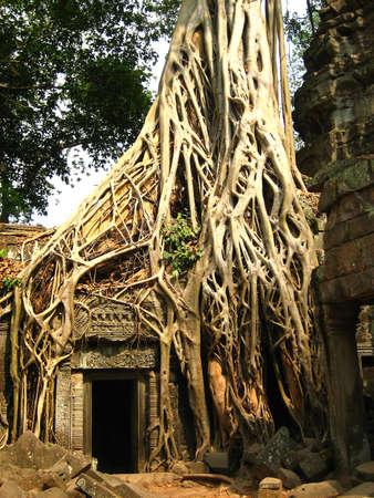 Tree root at Angkor Wat photo