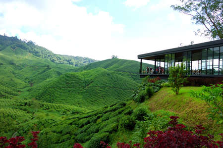 boh: A tea plantation farm in Cameron Highlands, Malaysia Stock Photo