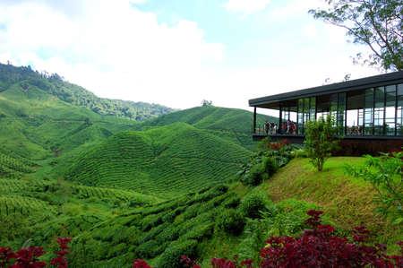 pahang: A tea plantation farm in Cameron Highlands, Malaysia Stock Photo