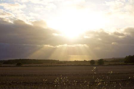 hay field: Sole raggiante contro il campo di fieno Archivio Fotografico