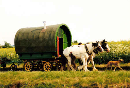 Gypsy cavaran with horses, a small Gypsy cavaran with two big horses and a dog, travelling through British countryside in the summer. Stock Photo
