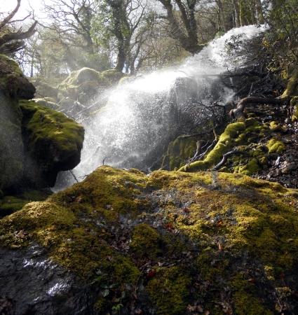 Dartmoor waterfall 2, a small waterfall with mossy rocks and sunlight, in Dartmoor, Devon, England Stock Photo