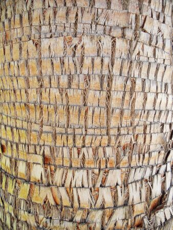 palm trunk texture, closeup of the fascinating texture of a palm tree trunk Stock Photo - 14810561