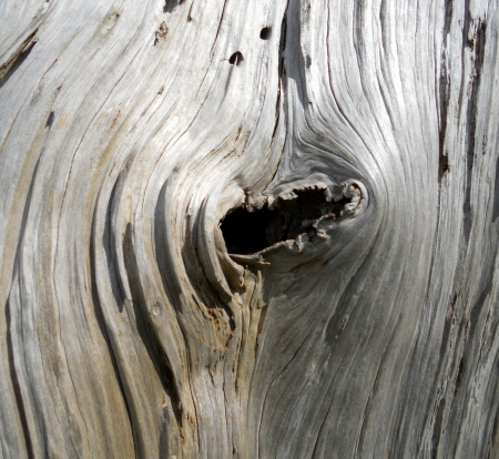 dead wood: Dead wood knot, hole in the knot on a dead tree with beautiful and fascinating textures