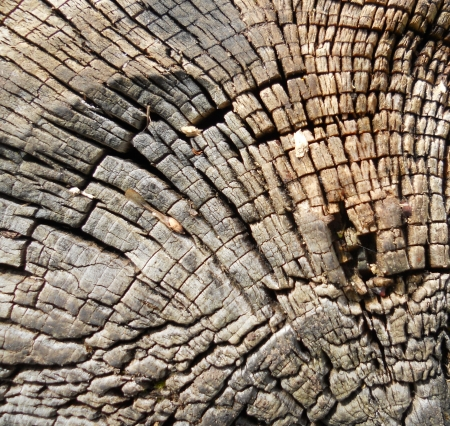 dead wood: Dead wood log texture, fascinating textures of the end of a log of dead wood  oak  Stock Photo