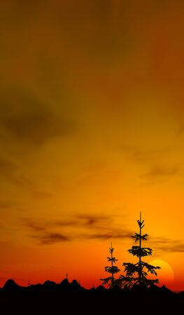 sunset trees, a digitally created image of small fir trees and a glorious warm sunset  photo