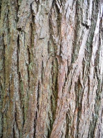 treetrunk: bark texture 3, texture of tree bark