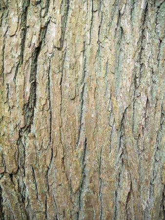 treetrunk: bark texture, texture of tree bark