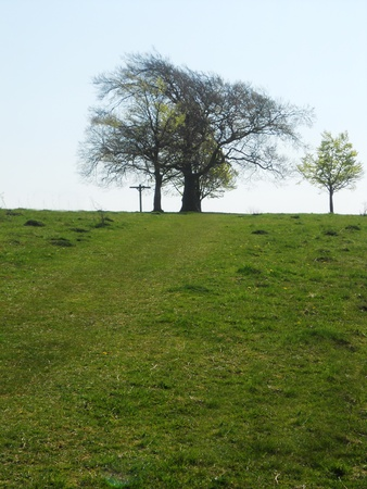 beech tree: beech tree on horizon in sunlight, Surrey, UK
