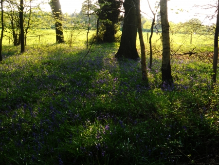 deciduous woodland: sunlit wood 2, open deciduous woodland and field in spring, with evening sunlight and shadows