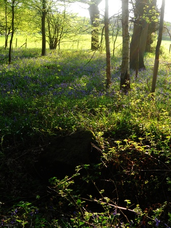 deciduous woodland: sunlit wood in spring, open deciduous woodland and field in spring, with evening sunlight and shadows