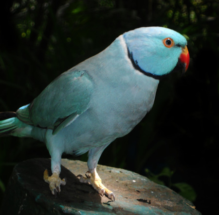 living things: a turquoise member of the parrot family Stock Photo
