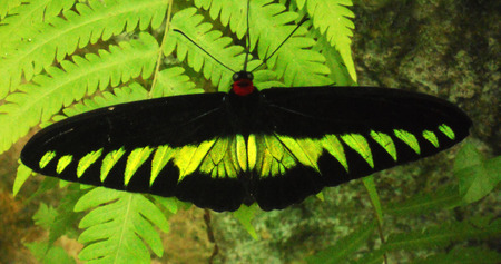 a beautiful tropical butterfly with wings outstretched
