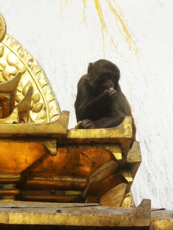 monkey on temple roof