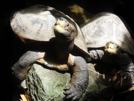 dappled: pond turtles, Asian pond turtles in dappled sunlight Stock Photo