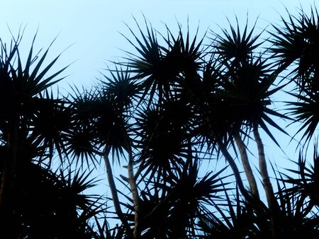 tropical plant: spiky tropical plant silhouette