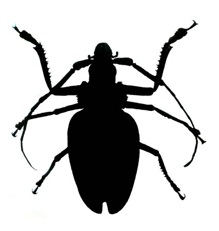 large beetle (clipped on white background)