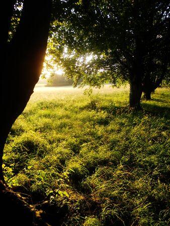 shadowed: sunlit grass between shadowed trees