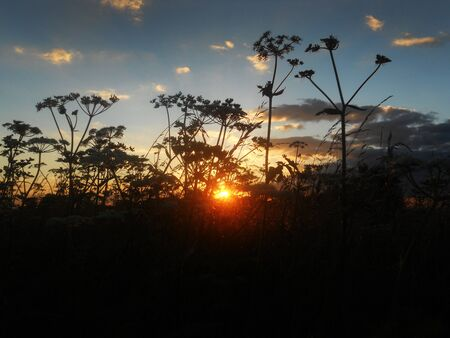 wildflowers silhouetted by sunset Stock Photo