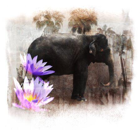 「アジア」コラージュ、象と蓮の花 写真素材