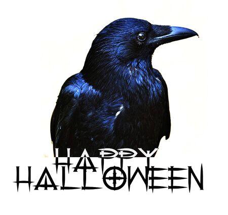 Happy Halloween card with crow and wording saying Happy Halloween.