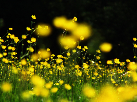 a beautiful meadow with buttercups in Surrey, UK, shallow depth of field. Stock Photo