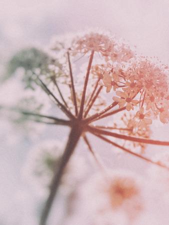 British wildflowers growing with tinted blur vignette. Stock fotó