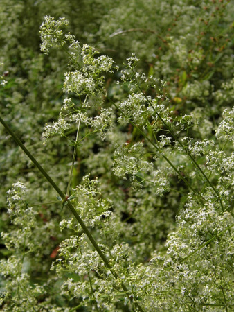 British wildflowers growing.